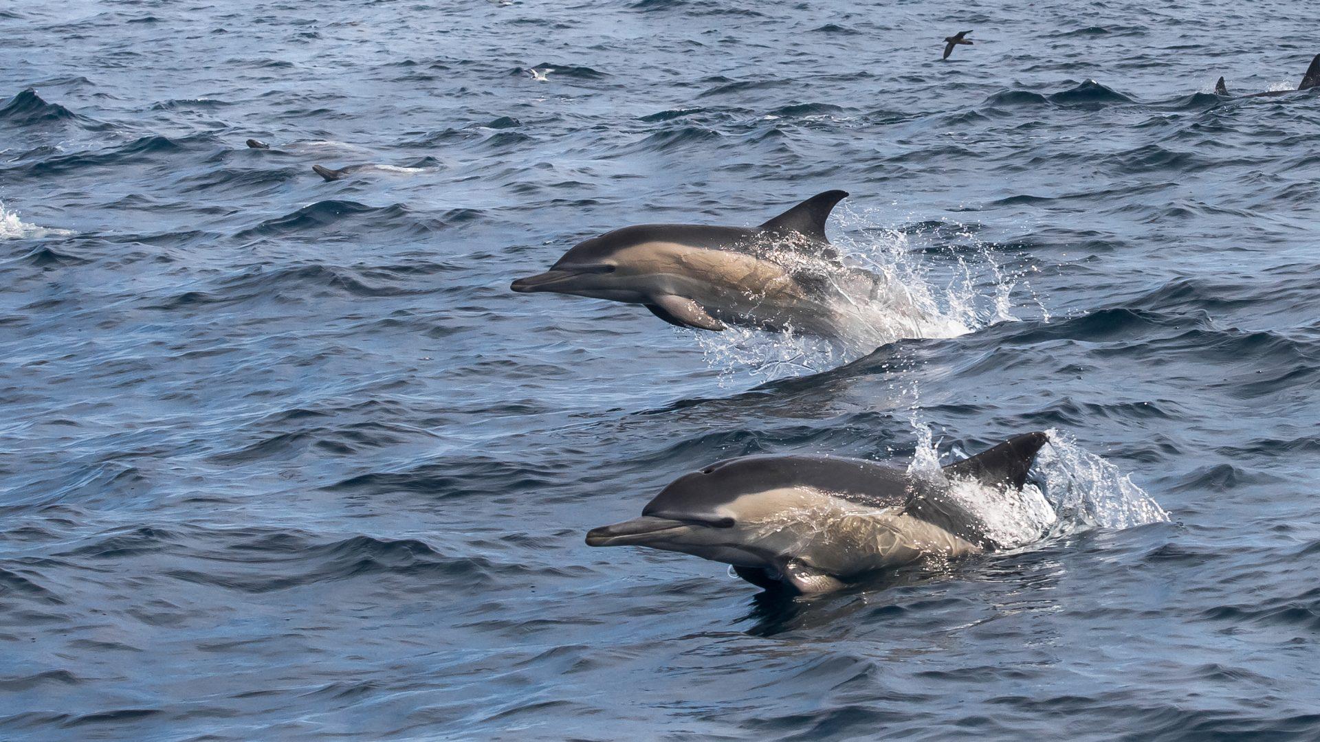 Avistamiento Delfines Porto do Son