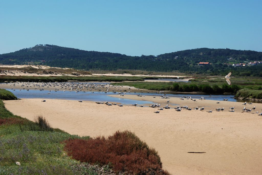 Lagunas de Carregal en Corrubedo